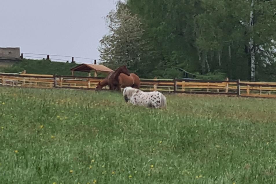 Diese Pferde haben bei Neugersdorf auf dem Gleis gestanden.