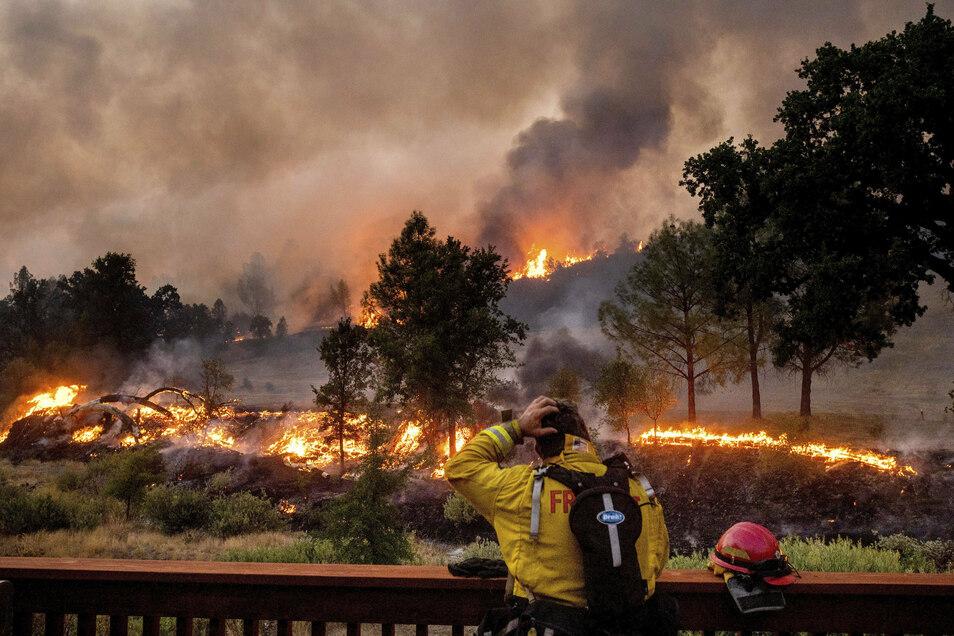 Kalifornien kämpft um die Eindämmung riesiger Waldbrände und hat nun auch Hilfe aus dem In- und Ausland angefordert.
