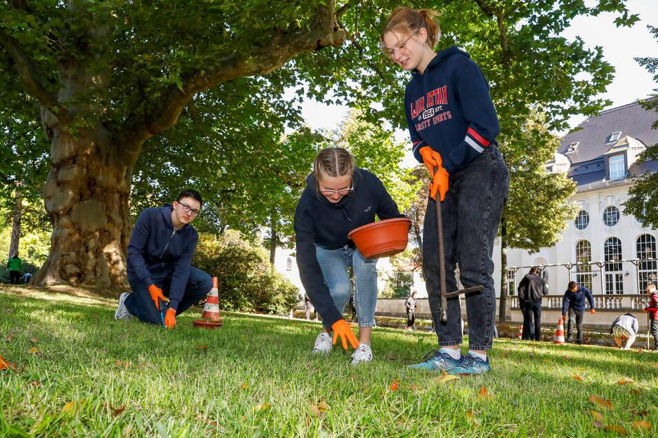 Beim Pflanzen der Krokuszwiebeln leisteten die Schüler der Klasse 10A von der Parkschule Zittau heute ganze Arbeit.