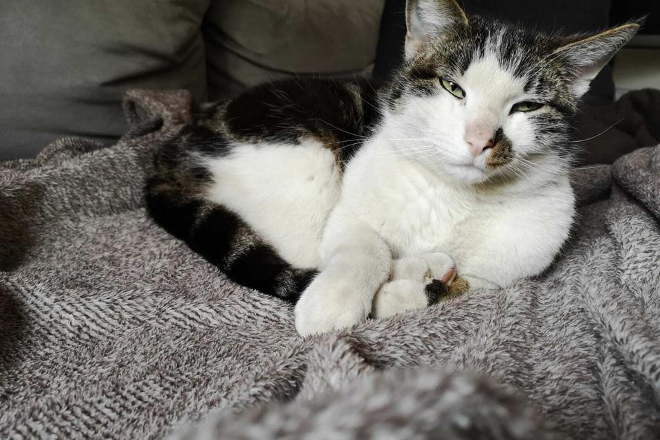 Katze Kaya beim Einschlummern auf der Couch.