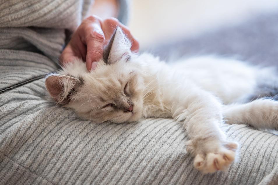 Für Haustiere wie Katzen gelten derzeit keine besonderen Maßnahmen wegen der Corona-Krise.