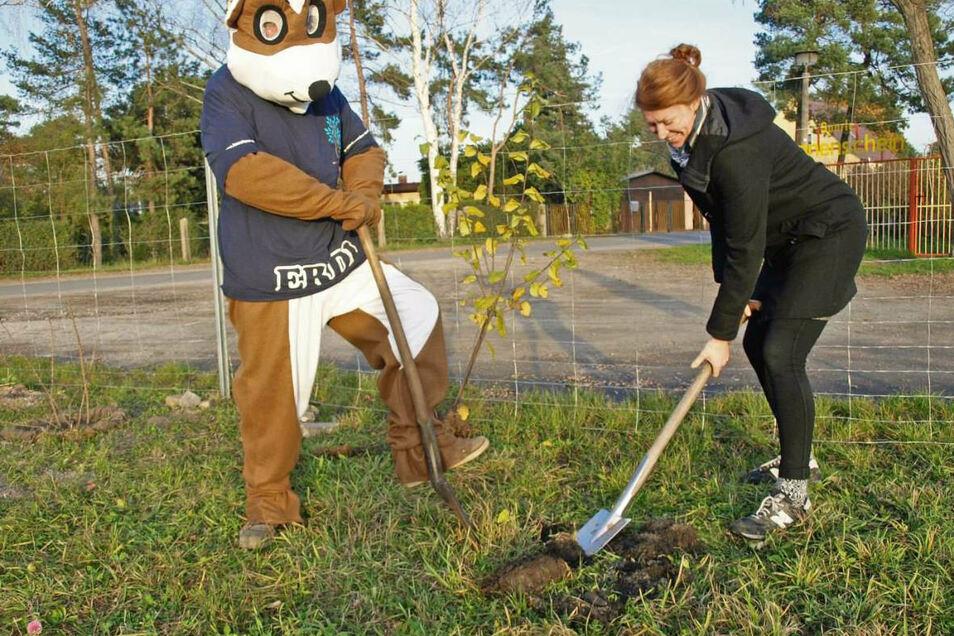Erdi und die Landtagsabgeordnete Antonia Mertsching pflanzten gestern auf der Bienenwiese Weißwasser einen Haselstrauch – eine von 270 Pflanzen, die schnell in die Erde müssen.