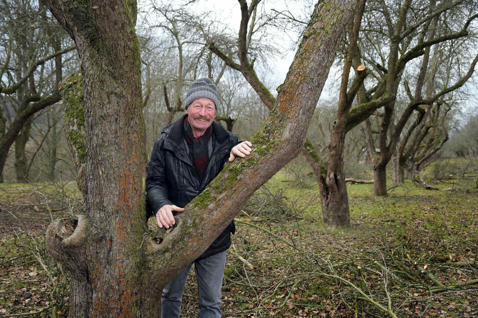 Pomologe Klaus Schwartz aus Löbau hat sich auf der Streuobstwiese umgesehen, die Familie Pohl in Klosterbuch bewirtschaftet. Dass viele der alten Apfelbäume mehr als 100 Jahre alt sind, konnte er schon einschätzen. Um die Sorten zu bestimmen, muss er noch