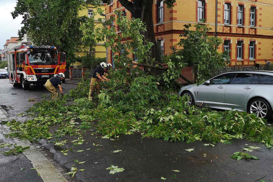 Auf der Hermannstädter Straße in Laubegast stürzte ein Ast auf ein Auto.