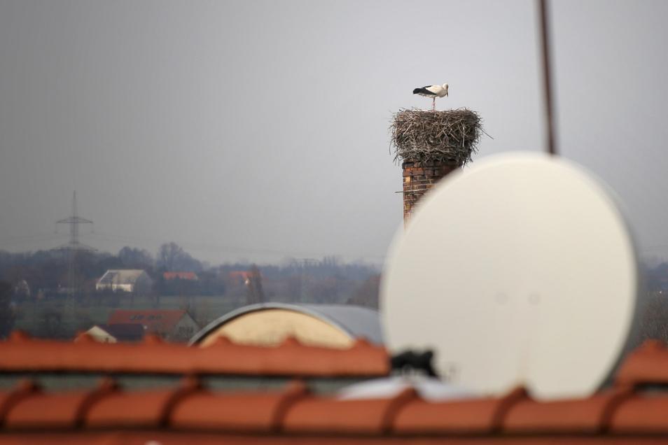Blick auf das Storchennest am Autohaus Hercher in Riesa. In der Elbestadt haben sich drei Paare niedergelassen.
