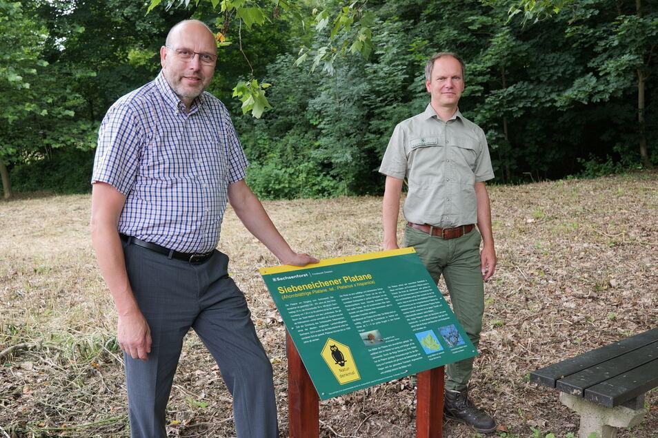 An der Platane am Eingang zum Schlosspark Siebeneichen ist jetzt eine Hinweistafel angebracht und von Oberbürgermeister Olaf Raschke (parteilos) und Revierförster Thomas Nikol eingeweiht worden.