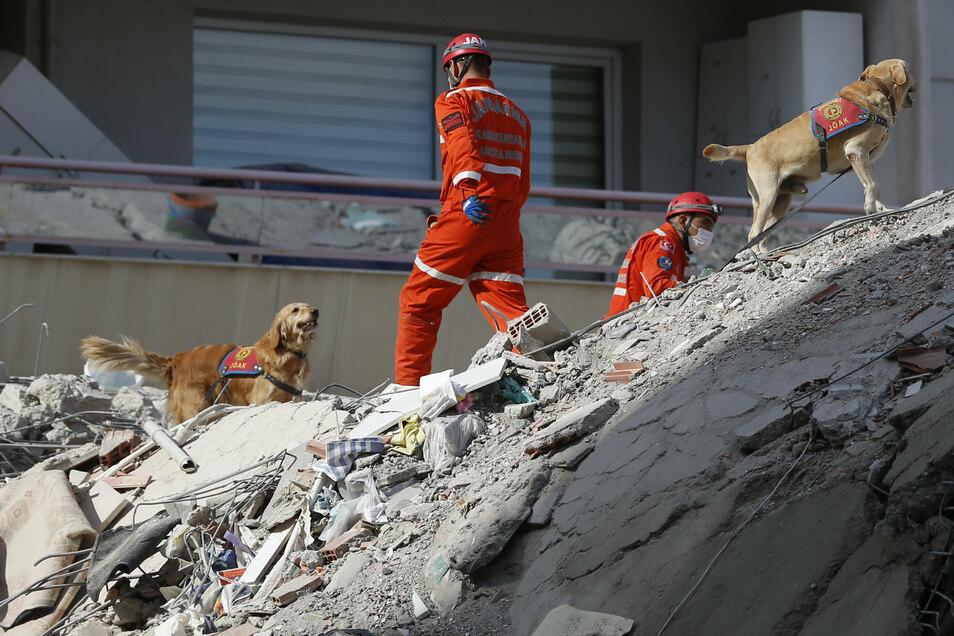 Mit Spürhunden wird in den Trümmern eines eingestürzten Gebäudes nach Überlebenden gesucht.