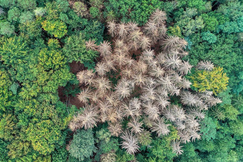 Die Trockenheit ist ein Problem in Sachsens Wäldern.  Im Frühling sind vor allem junge Laubbäume durch Spätfrost geschädigt worden.