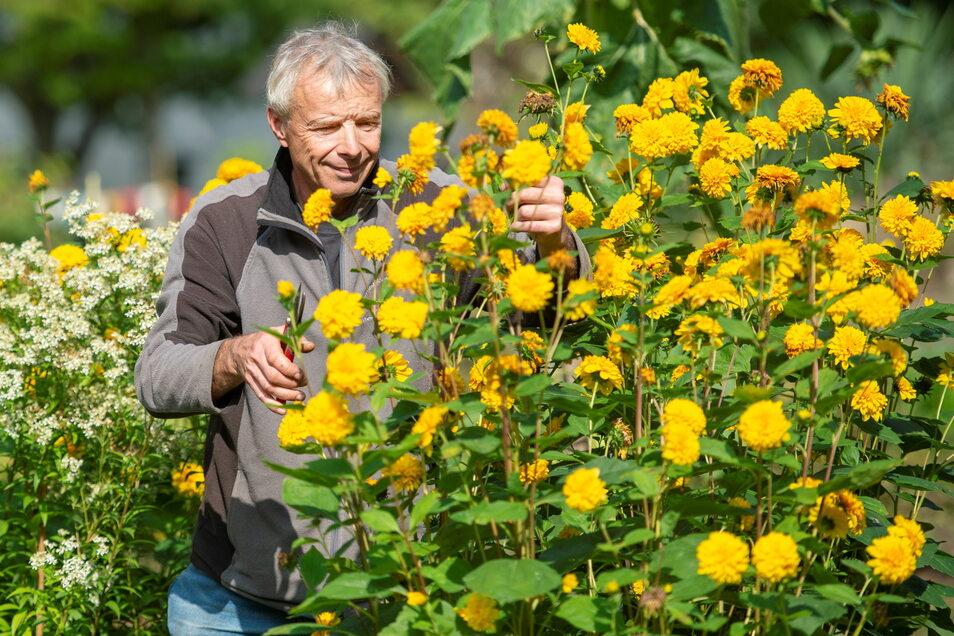 Herbstliche Blütenpracht im Pirnaer Tafelgarten: Jan Deelen ist hier der Chef.