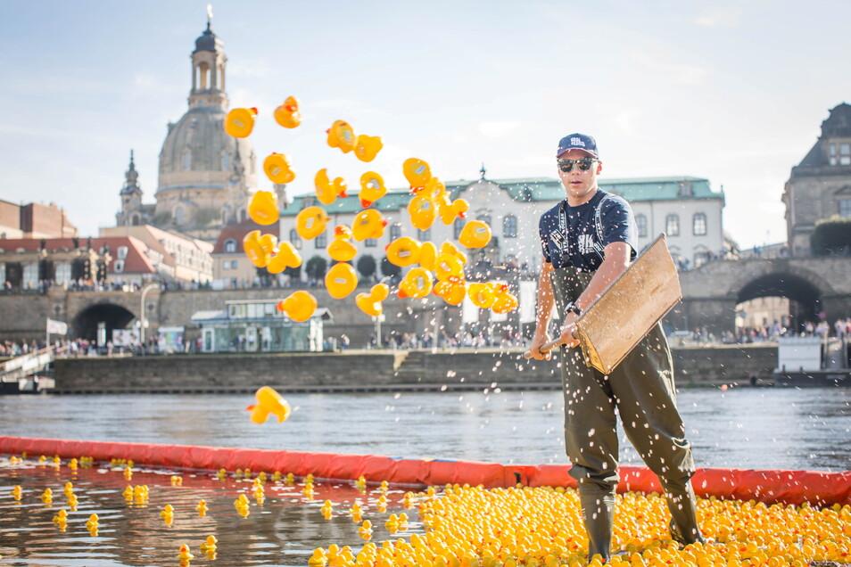 Flieg Entchen, flieg: 7.000 Enten schippern für einen guten zweck die Elbe entlang.