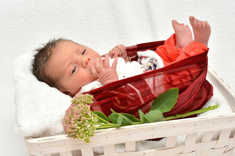 Clara-Joana Schwiertz, geboren am 3. September, Geburtsort: Städtisches Klinikum Dresden, Gewicht: 3.040 Gramm, Größe: 48 Zentimeter, Eltern: Anett Schwiertz und Mirko Bardoßeck, Wohnort: Radeburg
