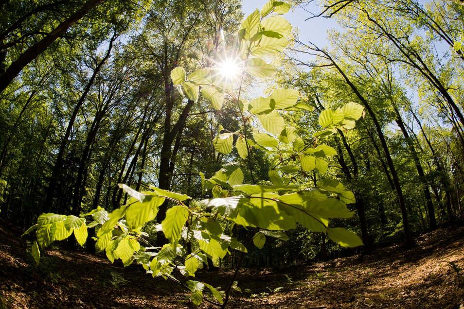Frische Luft und ganz viel Grün: Der Aufenthalt in der Natur tut der menschlichen Gesundheit sehr gut.