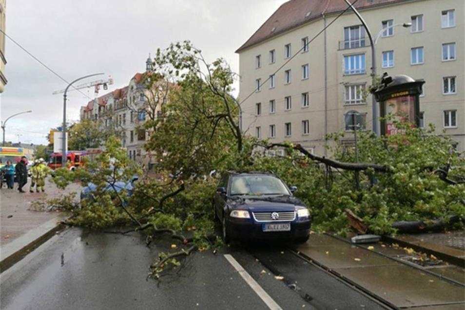 Hier stürzte ein Baum um und...
