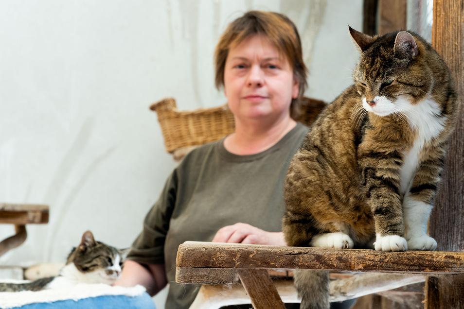 """Kater """"Stromer"""" sucht ein neues Zuhause. Das Tierheim in Bloaschütz möchte das 20 Jahre alte Tier gemeinsam mit seiner Katzenfreundin vermitteln. Beide gehörten einer alten Dame, die ins Pflegeheim umzog, erklärt Tierpflegerin Kerstin Heinzke."""