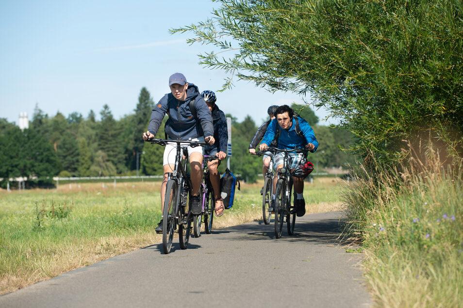 Kopf einziehen oder ausweichen: Auf dem Elberadweg zwischen Laubegast und Tolkewitz wird es durch diesen Busch mitten in einer Kurve richtig eng.