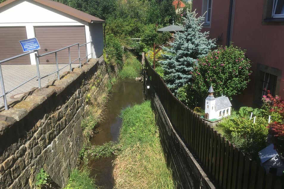 Wucherungen im Bachlauf der Seltenrein lassen den Bach bei Hochwasser langsamer abfließen.
