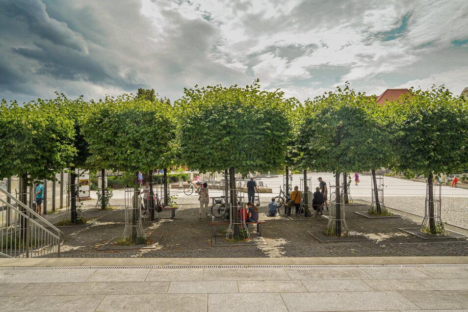 Unter anderem unter den Bäumen in der Nähe der Bautzener Kinder- und Jugendbibliothek halten sich die Trinker auf.