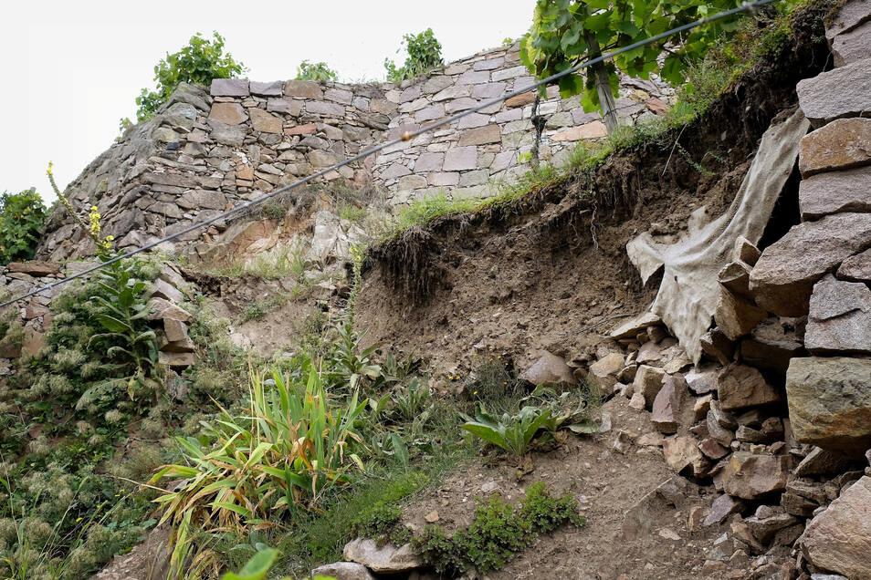 Leider ein Anblick, den man immer häufiger sieht: Eingestürzte Weinbergsmauer in Meißen.