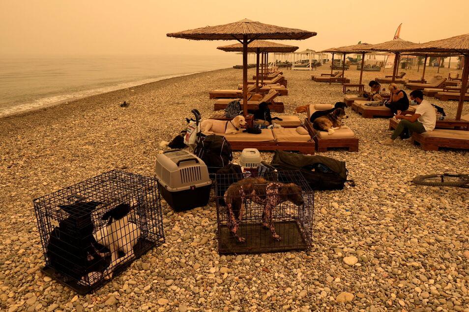 Menschen mit ihren Haustieren warten an einem Strand im Dorf Pefki auf der Insel Euböa auf ihre Evakuierung.