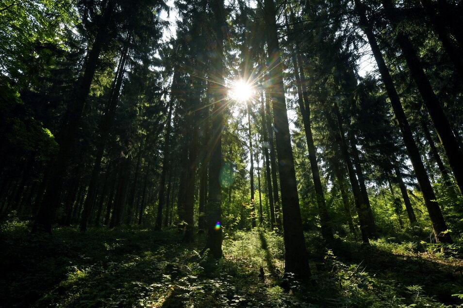 Wälder, die viel CO2 aufnehmen, können helfen, den Klimawandel zu begrenzen. Deshalb sollen sie nun gefördert werden.