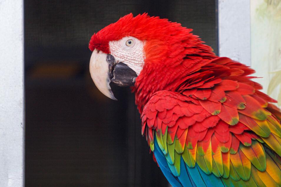 Während der Schließung des Tierparks waren einige Papageien ein bisschen frustriert, weil niemand vor ihnen stand, dem sie was nachplappern konnten.