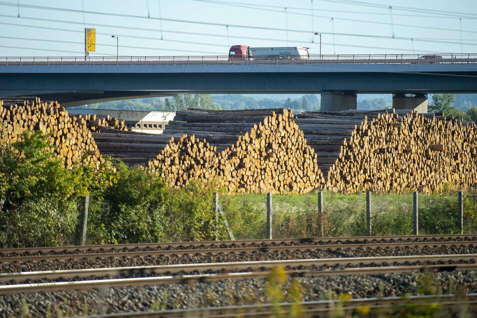 Über mehrere Hundert Meter erstrecken sich die Holz-Polter links und rechts der Sachsenbrücke in Pirna.
