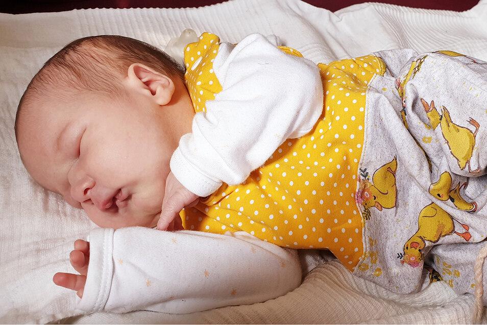 Hermine Caroline, geboren am 5. Juni, Geburtsort: Kamenz, Gewicht: 3.670 Gramm, Größe: 49 Zentimeter, Eltern: Caroline und Paul Schlafke, Wohnort: Lomnitz