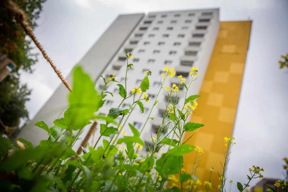 Dresden will Tausende Wohnungen kaufen, die Vonovia und Deutsche Wohnen gehören.