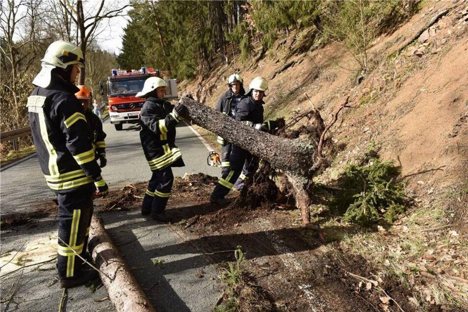 Ganz oft musste die Feuerwehr 2017 ausrücken, um umgeknickte Bäume von den Straßen zu beseitigen, so wie hier am 2. März auf der Straße zwischen Hausdorf und Schlottwitz. Ganz viele Einsätze gab es nach dem Sturm Herwart.