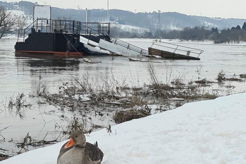 Die Dampferanlagestelle in Radebeul. Von Montag auf Dienstag wird der Pegel wieder unter die erste Alarmstufe vier Meter sinken.