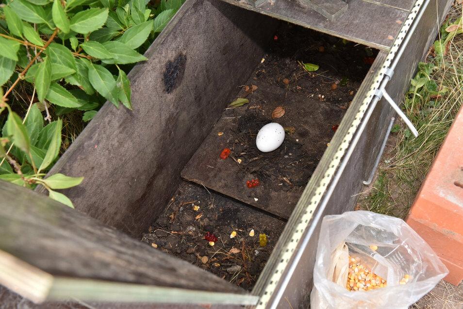 Die mit Lockmitteln präparierte Kastenfalle: Waschbären stehen nicht nur auf Eier, sondern auch auf Maiskörner, Hundefutter und Gummibärchen.