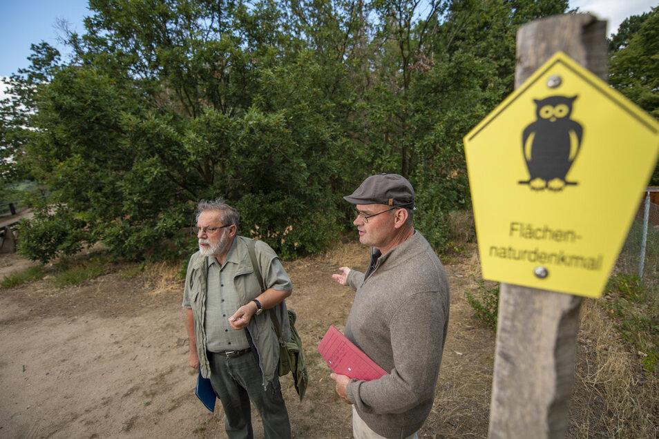 Professor Peter A. Schmidt (l.) vom Heimatschutzverein während einer vorangegangenen Exkursion im Flächennaturdenkmal Bosel bei Sörnewitz. Der Experte wird am kommenden Sonnabend eine Exkursion durch die Pflanzenwelt des Gebietes führen.
