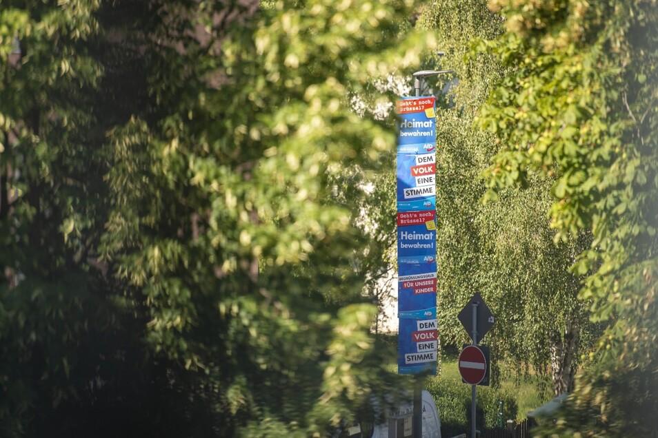 So sehen viele Laternen in Radebeul aus: Sehr viel AfD und dazwischen CDU-Plakate. Für die Grünen blieb nur noch unterhalb der Sichthöhe Platz, weil die anderen verfrüht aufgehängt haben.