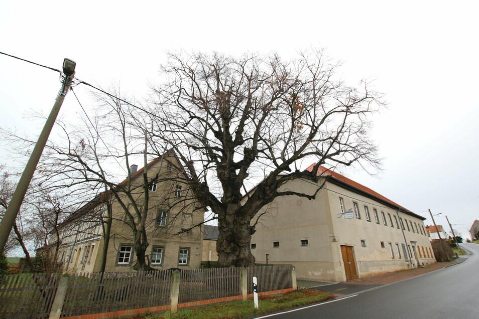 In Geleitshäuser steht direkt an der Straße in einem Garten Ziegers Linde, die mehr als 300 Jahre alt ist.