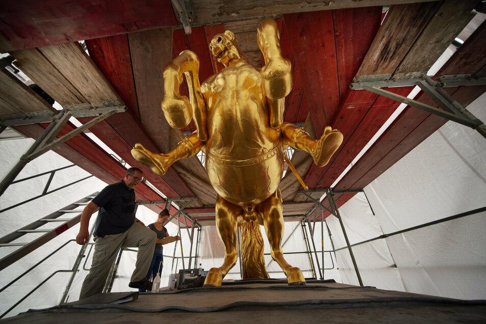 Harald Straßburger kennt den Goldenen Reiter inzwischen wie kaum ein anderer. DerRestaurator von der Firma Fuchs und Girke hat das Denkmal schon oft repariert.