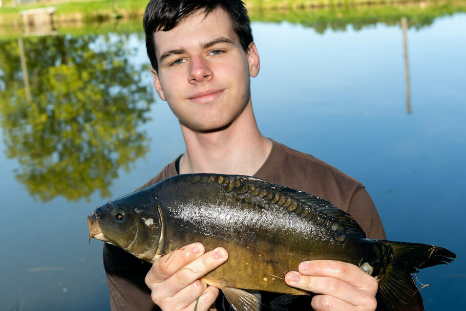 Nick Lerch ist Auszubildender in der Forellen- und Lachszucht Ermisch in Langburkersdorf, hier mit einem Karpfen.