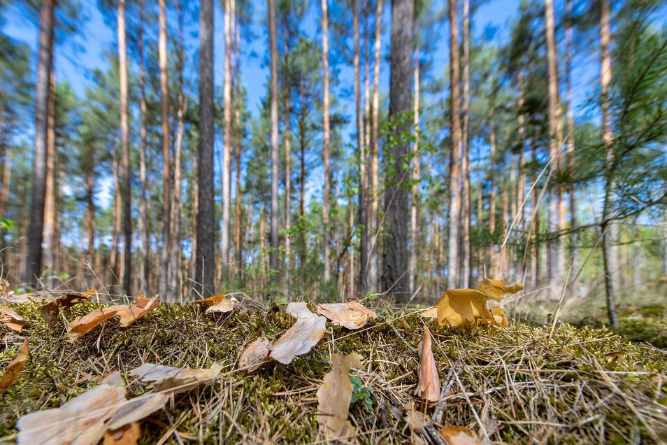 Aie ausbleibenden Niederschläge machen den Wäldern zu schaffen.