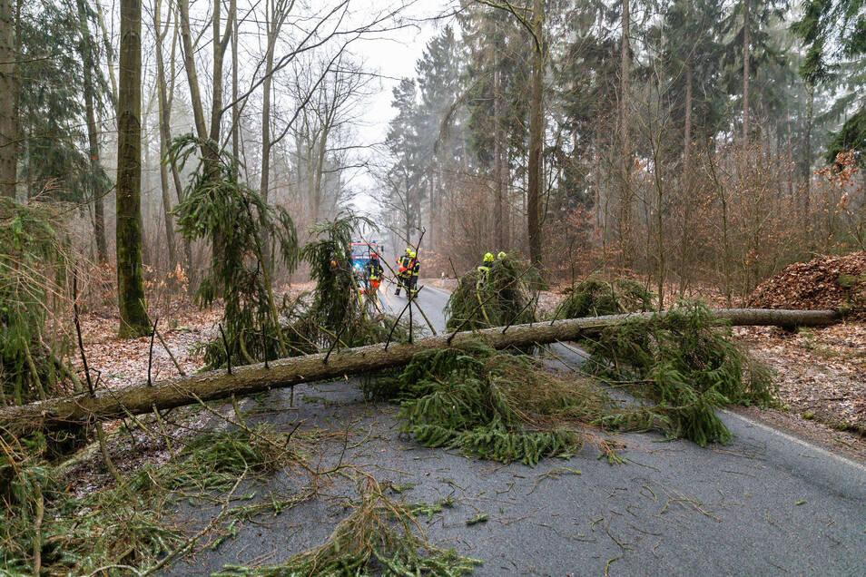 Der Baum lag quer auf der Straße zwischen Großröhrsdorf und Pulsnitz.