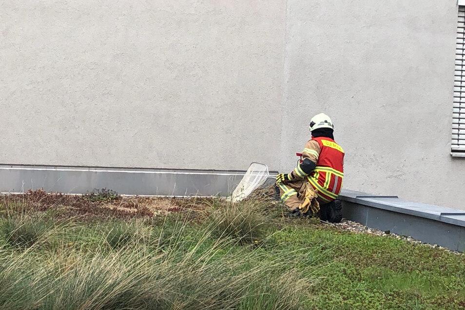 Feuerwehreinsatz auf dem Klinikflachdach: Ein Kamerad sammelte alle Entenküken ein, um sie zur Weißeritz zu bringen.