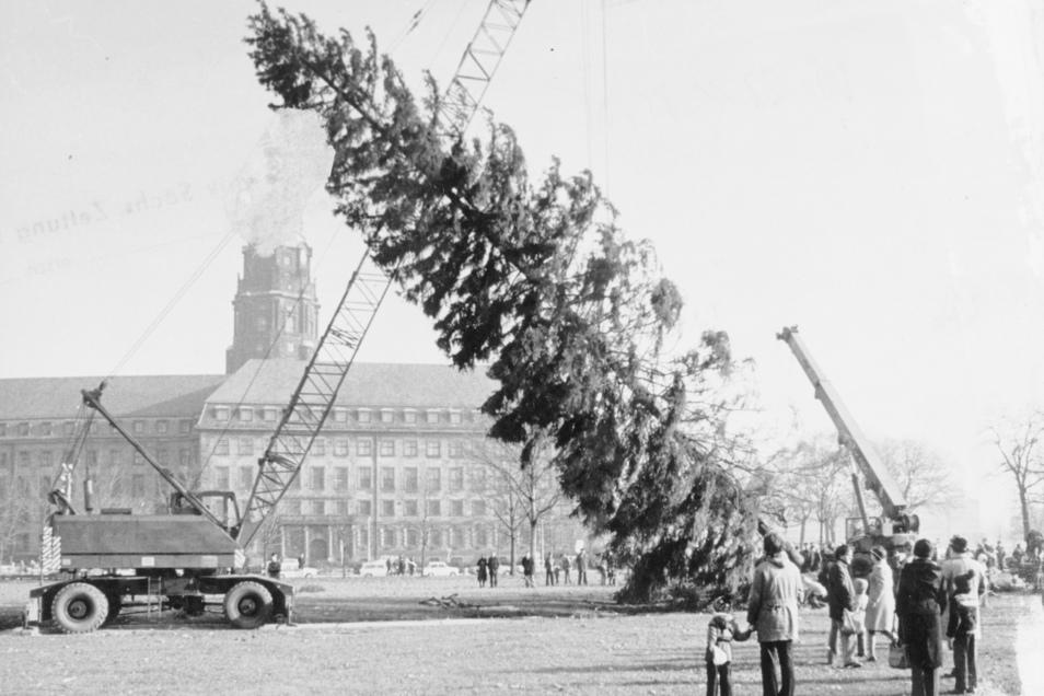 1978: Der Weihnachtsbaum ist auf dem Ferdinandplatz (damals Ort des Marktes) eingetroffen. Zum Boden hin wird er zwar schon etwas lichter, dafür macht er den Makel mit Größe wett.