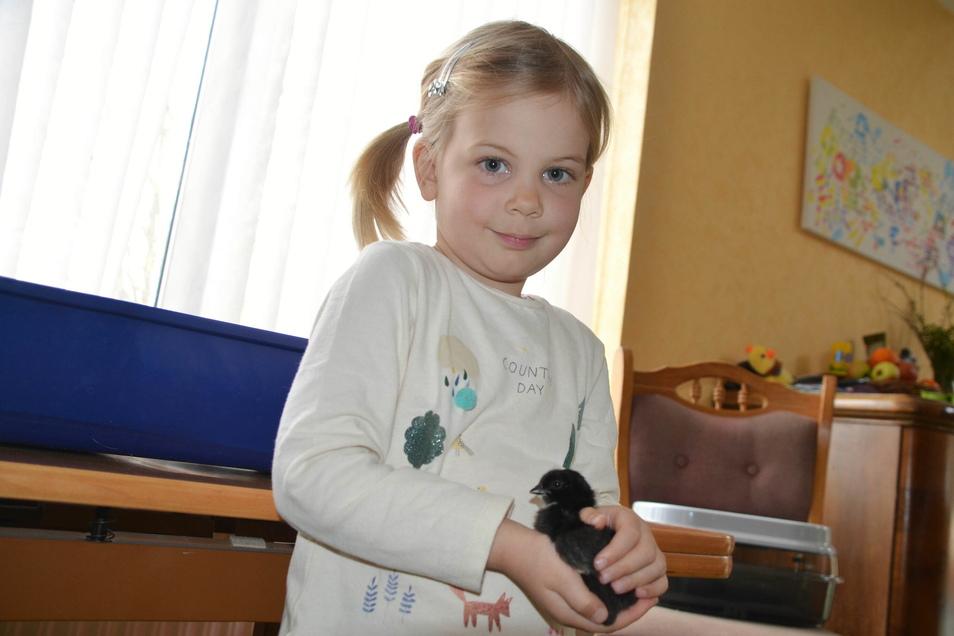 Die vierjährige Rabea konnte das Schlüpfen der Küken miterleben. Die Flauschkugeln sind federleicht.