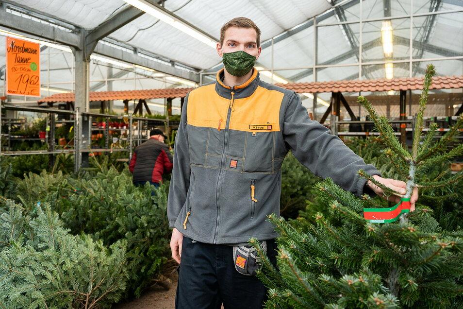 Mitarbeiter Max Barthel präsentiert Weihnachtsbäume im Görlitzer Hornbach-Markt. Sie werden auch nächste Woche noch verkauft.
