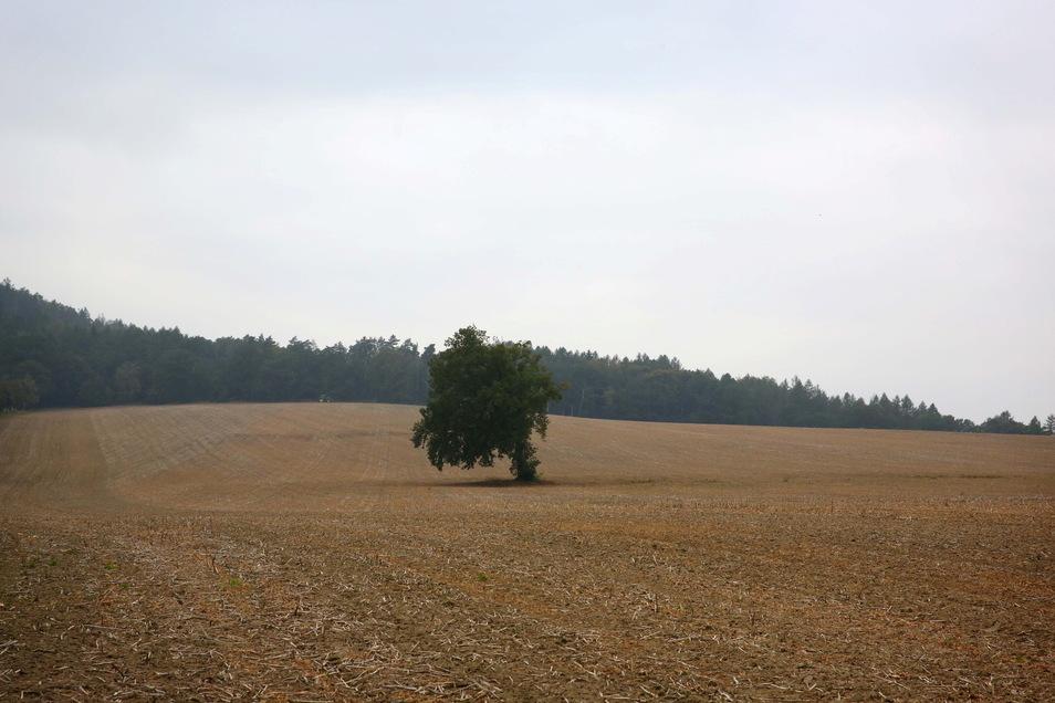 Die Felder am Lückerdorfer Walberg liegen im Trinkwasserschutzgebiet der Stadt Kamenz. Die neue Verordnung untersagt nun Landwirten das Aufbringen von Glyphosat in solchen Schutzgebieten.