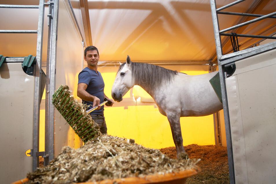 Da war die Welt noch in Ordnung: Im Oktober 2019 kümmerte sich Trickreiter Liviu Bococi an der Sachsenarena um das Wohlergehen seines Pferdes Kiru. Nun steht fest: 2020 wird es keine Auflage in Riesa geben, erst 2021 wieder.