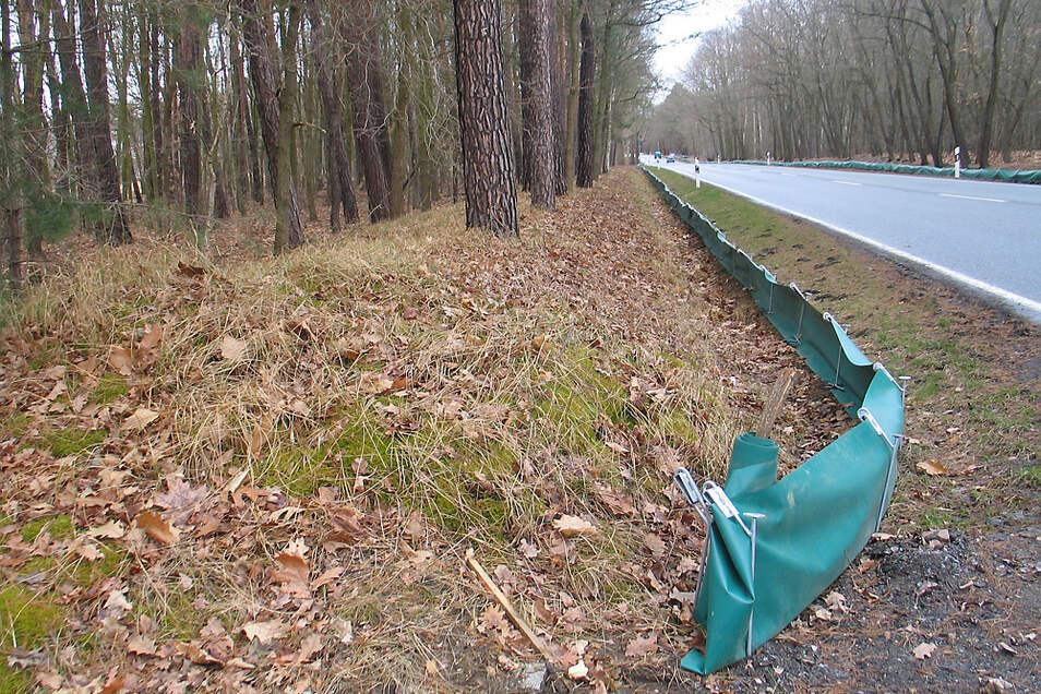 Zusammengenommen 680 Meter Krötenzäune sollen links und rechts der B156 bei Uhyst Amphibien davor schützen, auf dem Weg zum Romanikteich überfahren zu werden. Die Auffangeimer werden noch eingegraben.