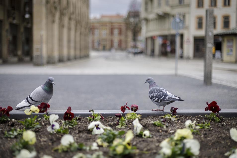Am 21. März entstand das Bild: Nichts mehr los in den Restaurants und auf den öffentlichen Plätzen - das merkten auch die Tauben.