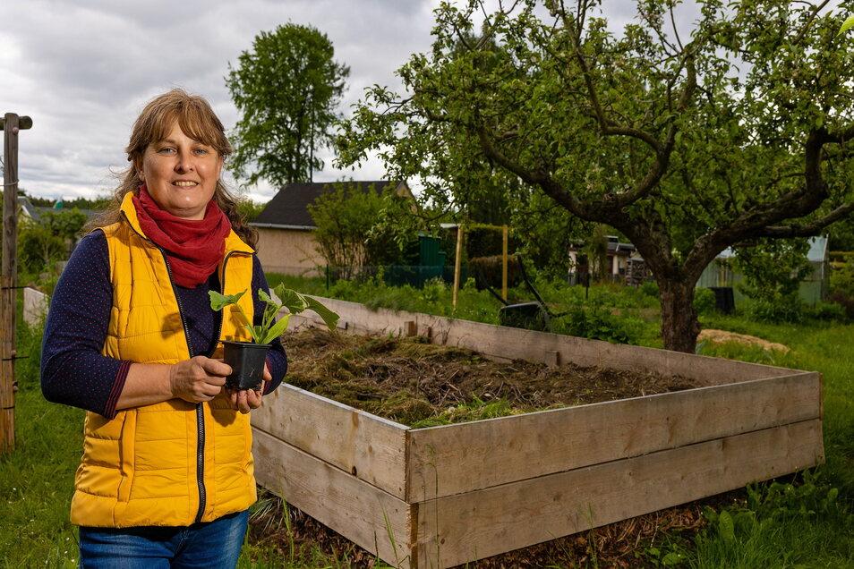 Aus Gartenabfällen der gesamten Kleingartensparte in Burgstädt entsteht ein riesiges Hochbeet. Katrin Reuter wird anfangs Starkzehrer wie Kürbisse und Zucchini darauf pflanzen.