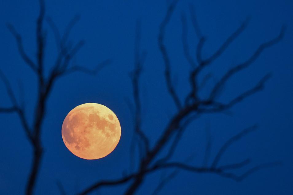 Der rötliche Vollmond war kurz nach Mondaufgang neben kahlen Ästen eines Baumes im brandenburgischen Sieversdorf zu sehen.