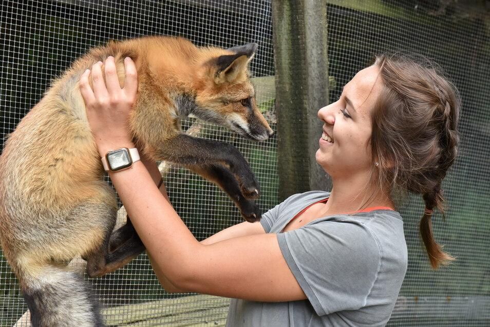 Das sind die besonders schönen Momente bei der Arbeit im Wildpark. Lisa Süßmann, die hier ihr Freiwilliges Ökologisches Jahr absolviert, tollt mit dem jungen Fuchs herum, dem der Besuch im Gehege sichtlich Spaß macht.