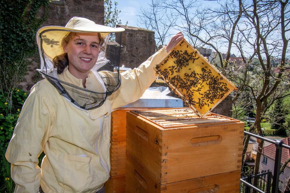 Paula Schiller kontrolliert die Waben ihrer mittlerweile drei Bienenvölker.